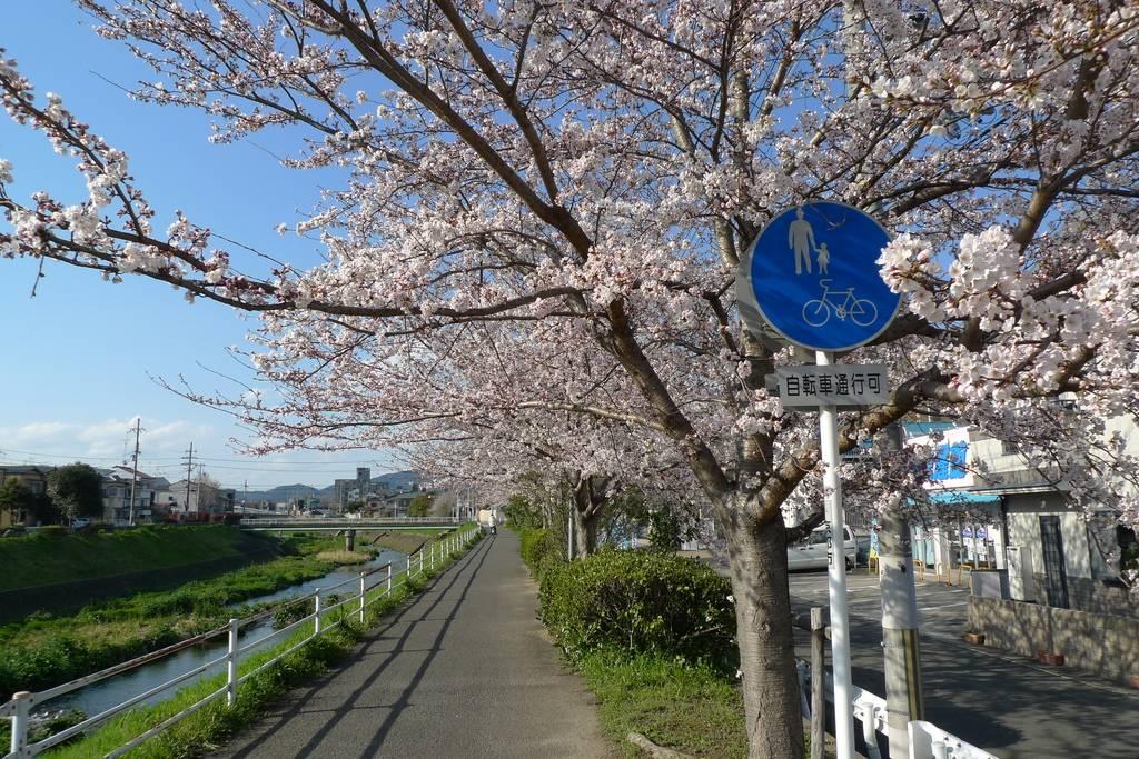 Verkehrszeichen Geteilter Fuß- und Radweg Japan Kirschblüte