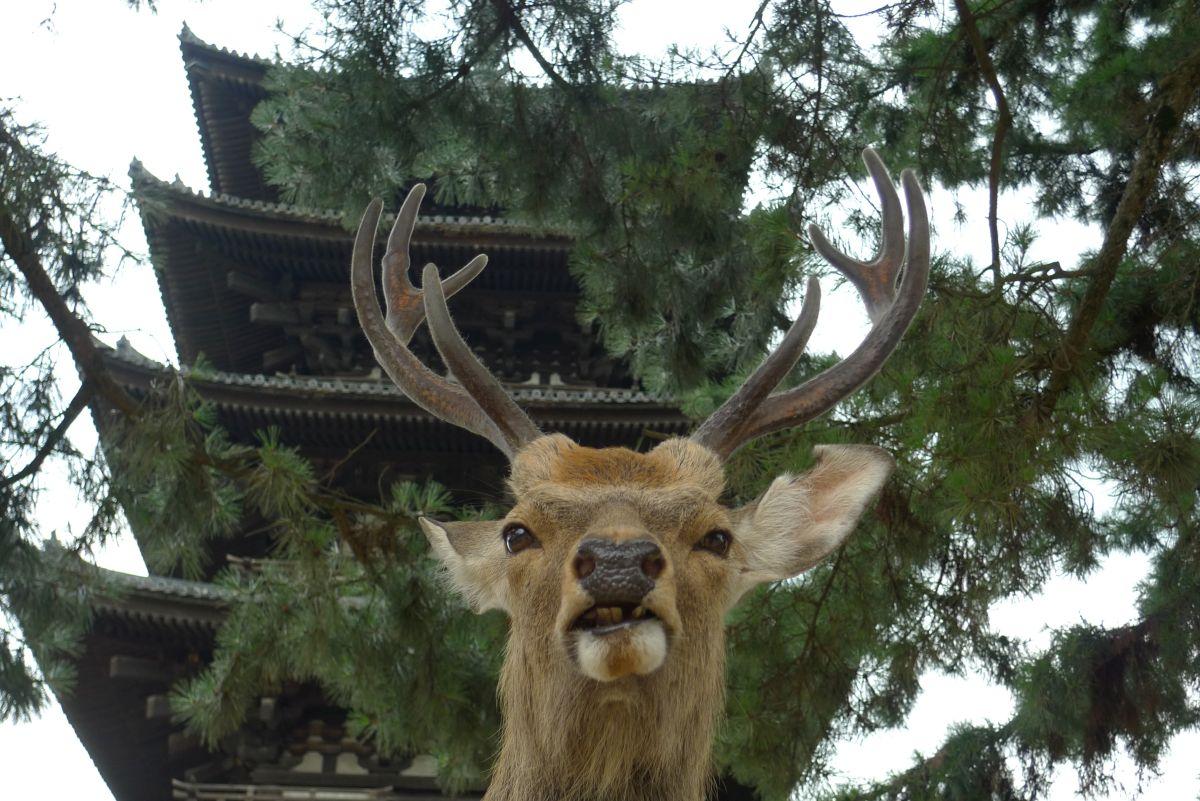 Osaka_Tagesausflüge_Tipps017