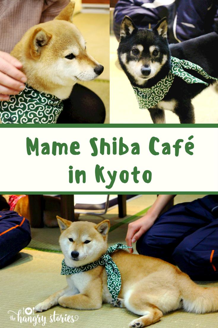Mame Shiba Cafe Pinterest 2