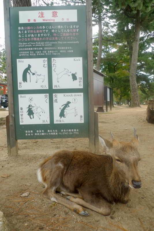 Warnschild in Nara: Probleme mit Hirschen gab es schon immer