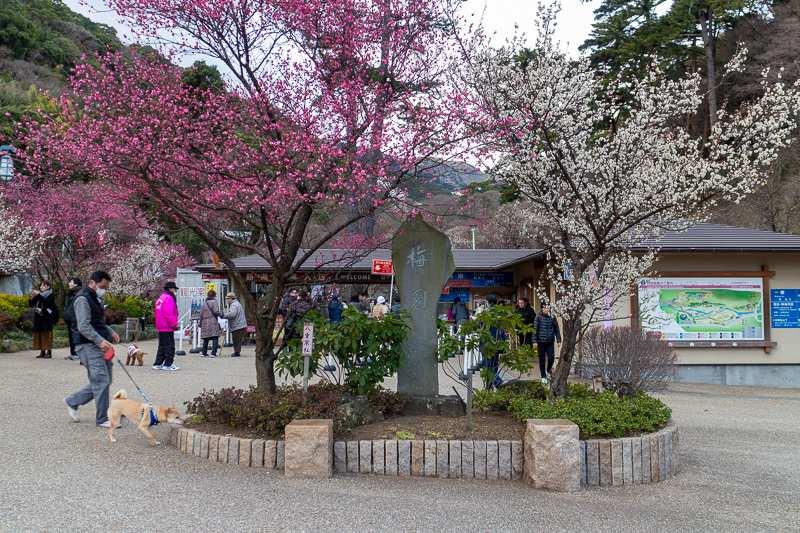 Atami Baien - Pflaumenpark