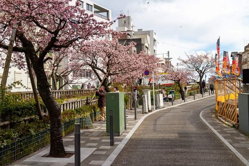 Atami Kirschblüte Straßenansicht