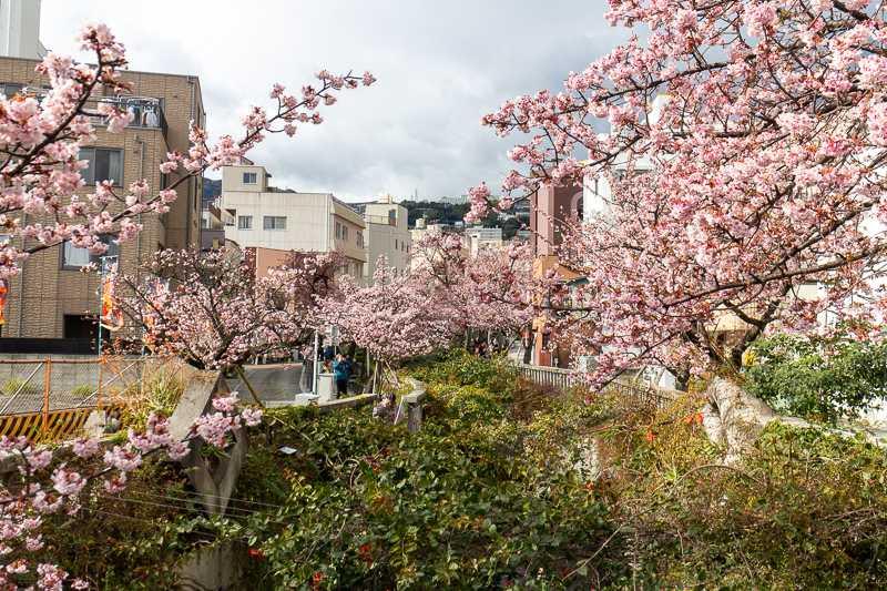 Atami Kirschblüte am Itogawa
