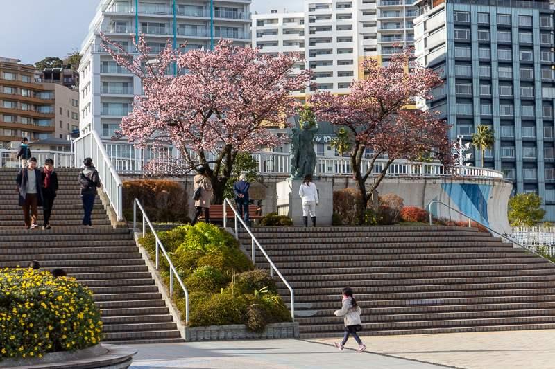 Atami am Meer - auch hier blühen Kirschbäume