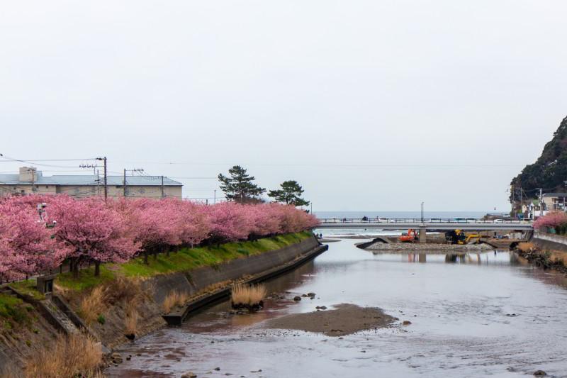 Kawazu Kirschblüte