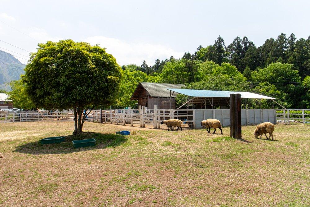 Hitsujiyama-Park