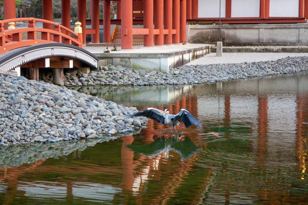 Wir hatten Glück und durften kurz vor Ende noch rein. Ein Reiher vergnügte sich im Wasser.