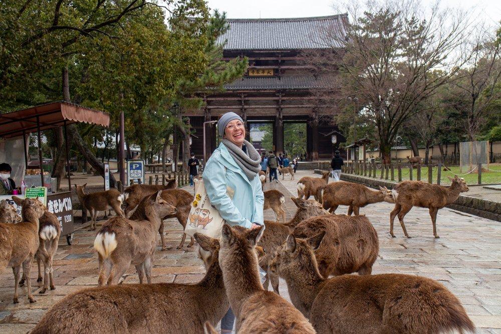 In Nara gibt es Rehe und es ist ein sehr guter Ort.