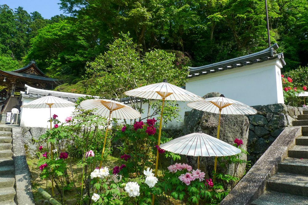 Im Oka-dera gibt es Tempelstuff aber auch diese tollen Schirmchen.
