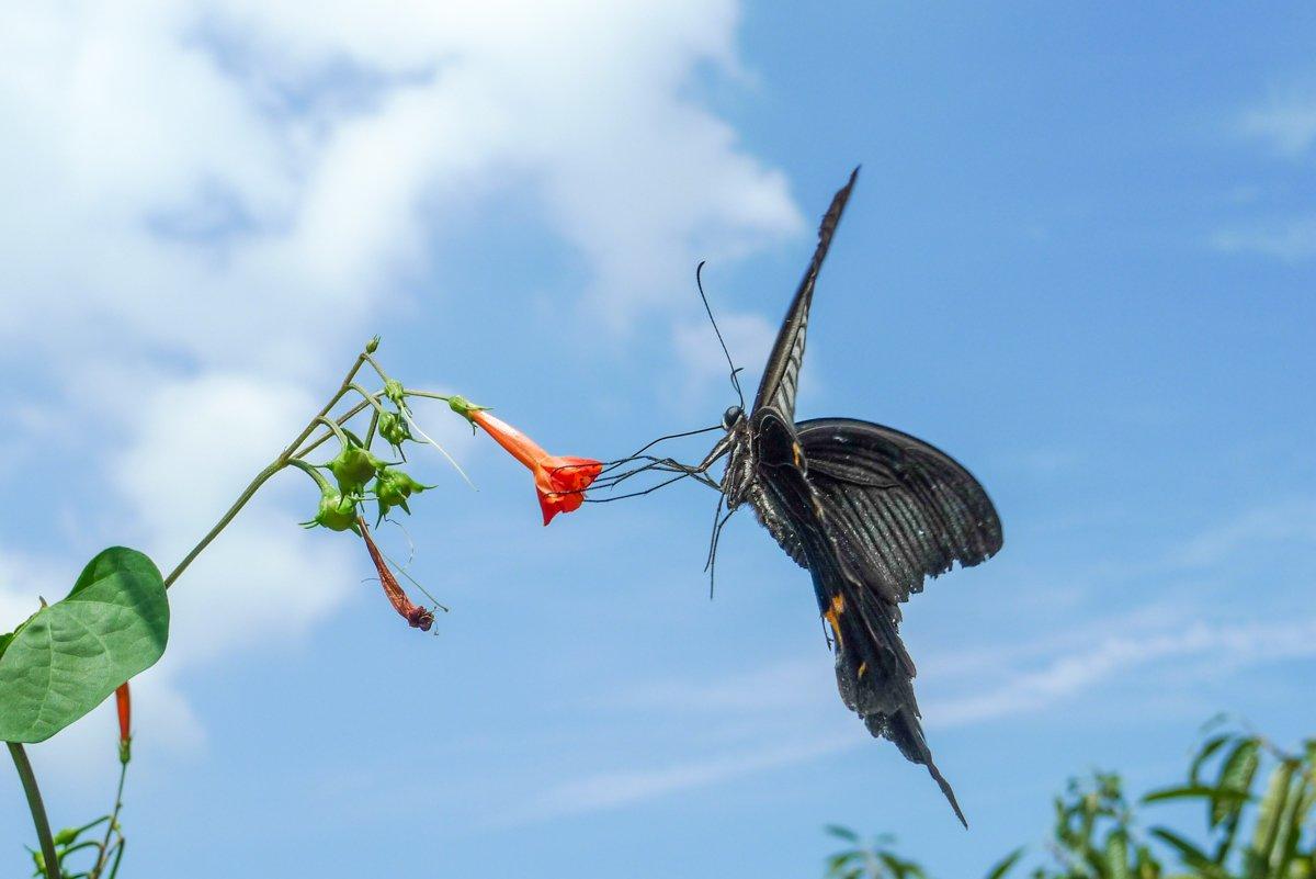 Auch die Schmetterlinge sind größer...